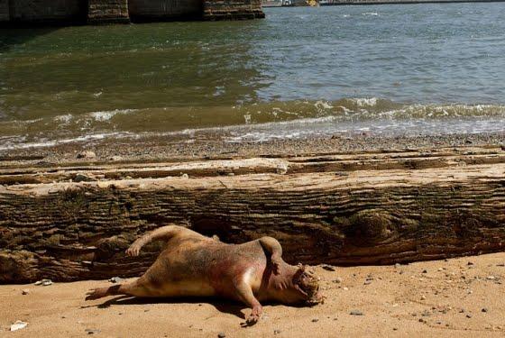 Ξεβράστηκε νεκρό παράξενο πλάσμα στη Νέα Υόρκη