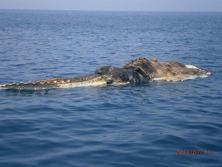 Περίεργο νεκρό πλάσμα στη θάλασσα [Εικόνες]