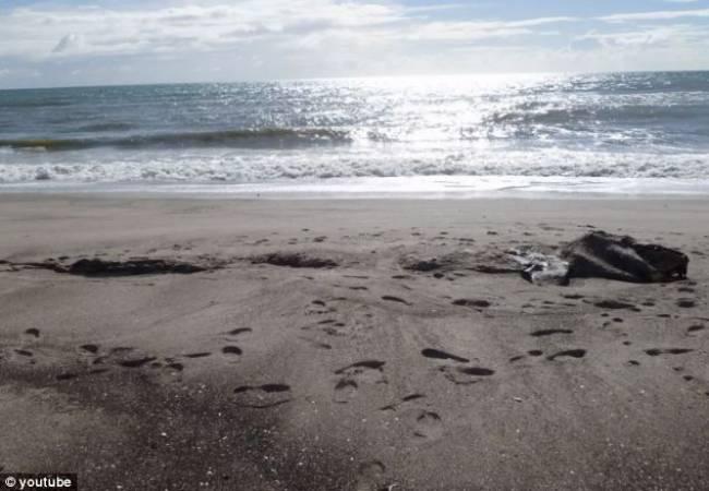 Μυστήριο με το τερατώδες πλάσμα που βρέθηκε σε παραλία!!!